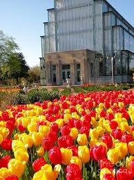 Spring Tulips at the Jewel Box in Forest Park