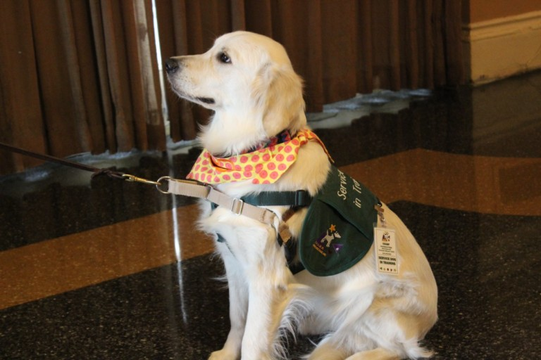 Champ Assistance Dog @ St Louis Rotary Grant Awards Program 2019